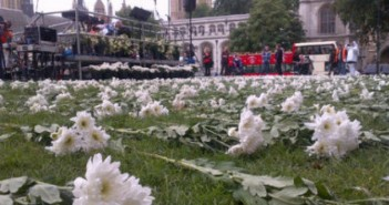 Hundreds of white flowers lying on grass
