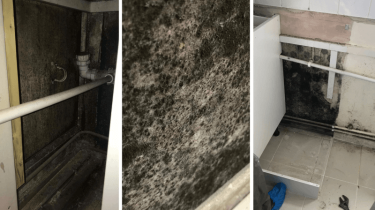 'Black mould in my flat is slowly poisoning me, and my council is to blame'